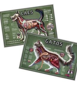 02 Mapas 65x100cm Anatomia E Características Cachorro & Gato