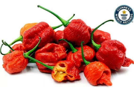 30 Sementes Pimenta Carolina Reaper Hp22b + Forte Do Mundo