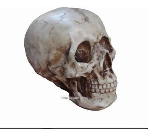 Cranio Caveira Tamanho Real Suporte Para Fone De Ouvido