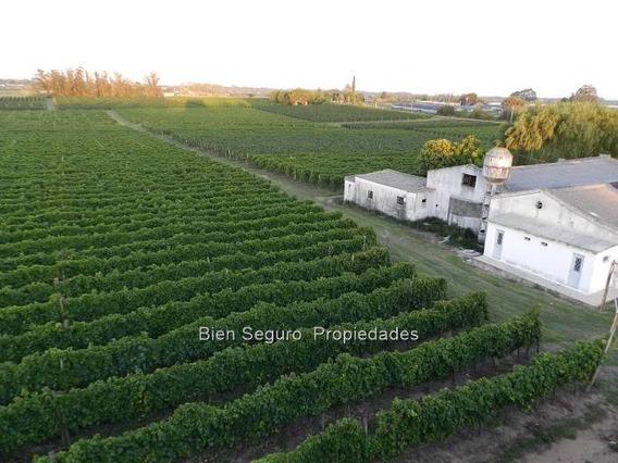 Chacra Con Viñedo Y Bodegas En Venta Próx. Toledo