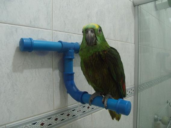 Poleiro Para Papagaio Com Ventosas Para Banheiro