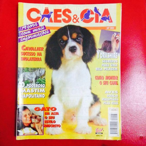 Cães E Cia - Cavalier