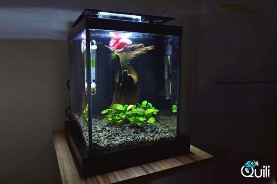 Aquário Quili Blackbox Nano 10l 110v + Luminária + Filtro