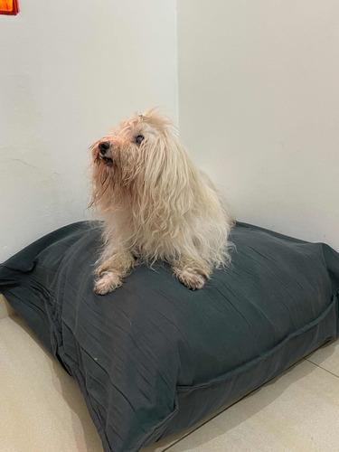 Imagen 1 de 8 de Almohadón Y Funda Tussur Para Mascotas Talle M