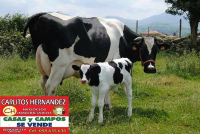Tambo 350 H Colonia P Arrendar Campo Agricola Ganadero Queso