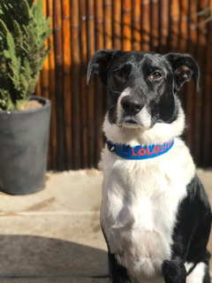 Collar Bordado Personalizado En 3 Cm De Ancho Pet Id