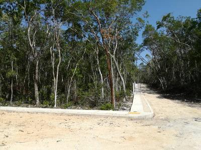 Tulum Terrenos Region 15 Esquina Av Fundadores $165 Usd X M