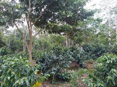 Terreno Agrícola Chacra Selva Centra Pichanaki-chanchamayo