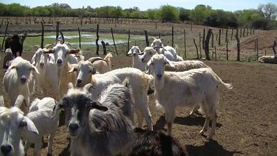Oportunidad Vendo Campo Agricola Ganadero Zona Va. Angela Ch