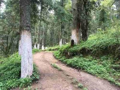 Terreno En Venta Construye Tu Cabaña Dentro Del Bosque, Lotes Desde 500 Metros