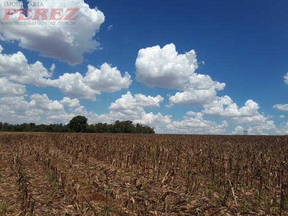 Chácaras_sítios_fazendas Para Venda - 13650.6308