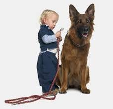 Adistramiento Canino A Domicilio