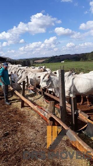 Rural Fazenda Com 4 Quartos - Fa35-l