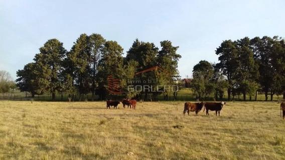 Campo En Uruguay, Maldonado, Solis- Ref: 25503