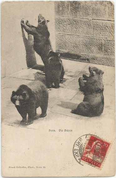 Antigua Postal De Osos, Zoológico Berna, Suiza 1915