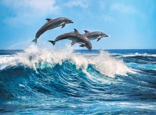 Delfines Sobre Las Olas 500 Pz Rompecabezas Clementoni