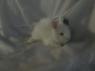 Conejos Cabeza De León Puros Entrego De Un Mes