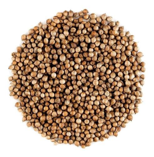 Semilla De Cilantro Planta Para Siembra, Huerto Y Cultivo
