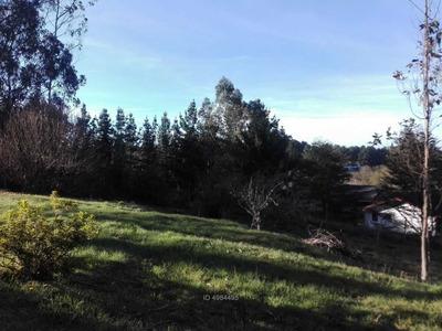 Sin Dirección, Puerto Montt