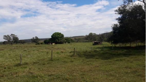 Fazenda A Venda Em Camapuã (dupla Aptidão) - 797