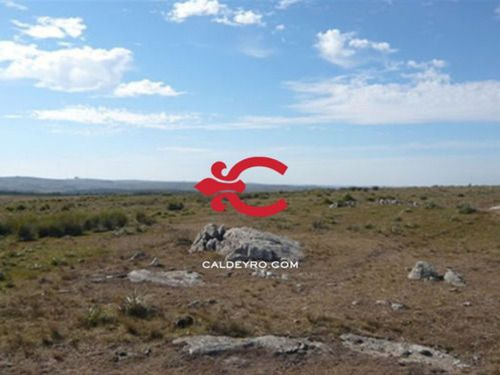 Campo En Lavalleja Ideal Forestación Ref. 384
