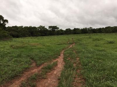 Fazenda A Venda Em Araguacema - To ( Soja ) - 536