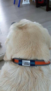 Plaquitas De Ident. Para Mascotas Promocion 2 X 1