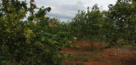 Finca De 50 Tareas Agrícola En Don Juan Monte Plata