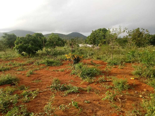 Imagem 1 de 2 de Vendo Um Lote Com Fruteiras Produzindo - Senhor Do Bonfim-ba