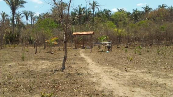Vende-se Terreno Com 8 Hectares Na Cidade De Miguel Alves