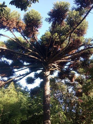 Imagen 1 de 6 de Plantines De Árboles