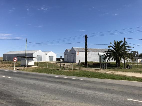 Local - Tarariras