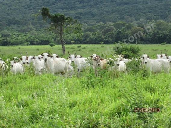 Fazenda Para Venda Em Corumbá, Região Da Estrada Parque - Fa0012