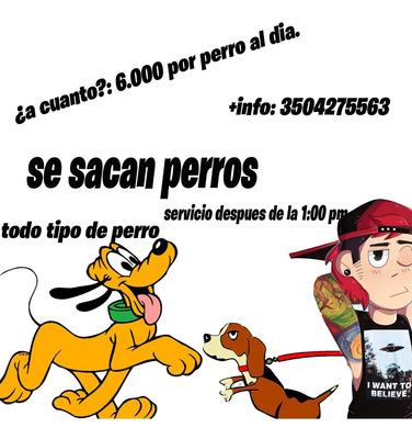 Se Pasea Perros Pontevedra