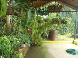 Casa Como Nueva Con Amplias Zonas Verdes Aserri
