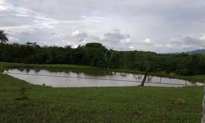 Fazenda Para Venda Em Niquelândia - 078