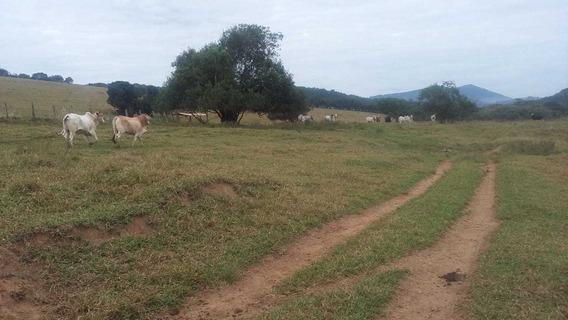 Fazenda - 215 Hectares - Carmo De Minas (mg) - 1787