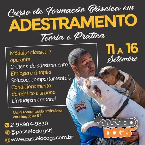 Curso De Adestramento Basico De Cães