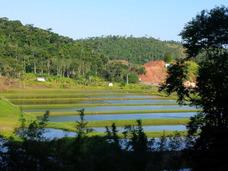 Criação Camarão Malásia-visita Técnica À Fazenda Sta. Helena