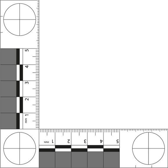 Kit 5 Escalas Para Fotografia Abfo N.2 Cm Pet Acoplado Fosco