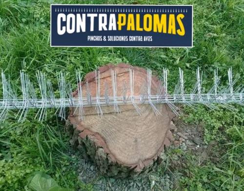 Imagen 1 de 6 de Pinchos Y Puas Espanta Palomas Antipalomas