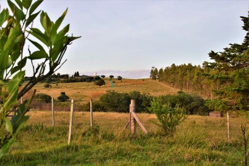 Campo De 6 Has A 25 Km. De San Carlos- Ref: 3447