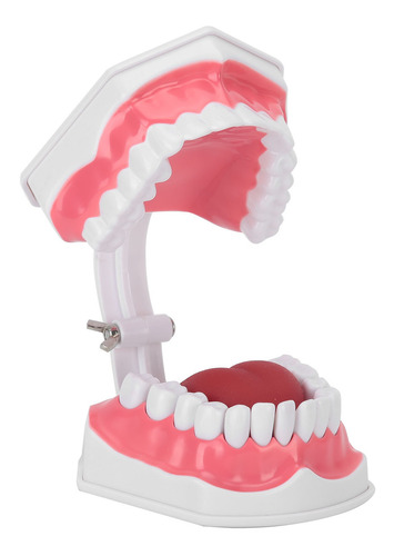 Adulto Estándar Typodont Modelo Youya Dental Abs Material St