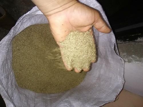 Semilla De Pasto Guinea