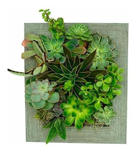 Retrato Jardines Plantador De Pared (8x10) - Plantas Suculen