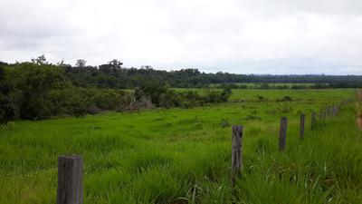 Fazenda Com 400 Alqueires Na Br 364 Em Rondônia