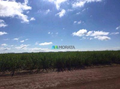 Fazenda Cana De Açúcar - 527 Ha - Perdizes (mg) - Codigo: Fa0109 - Fa0109