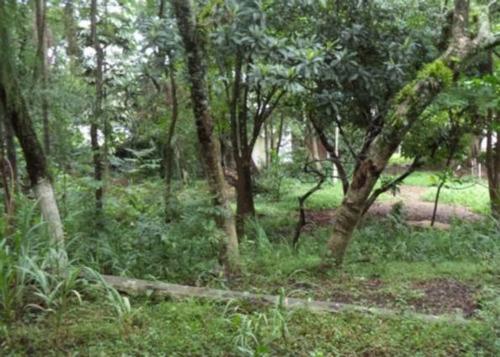 Terreno Em Ipanema - Lu23046