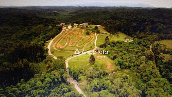 Chácara Com 4 Dormitórios À Venda, 146037 M² Por R$ 2.100.000 - Palmitalzinho - Quatro Barras/pr - Ch0072