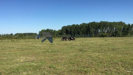 Campo En Venta -ref:1563